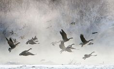 'Cold Morning Flight' by Doug Roane