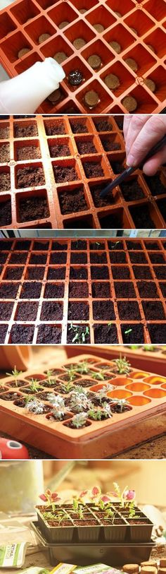 Start Seeds at Home with a Seed Starter Kit. Get more great information and tips about starting tomato seeds at http://www.tomatodirt.com/grow-tomatoes-from-seeds.html.