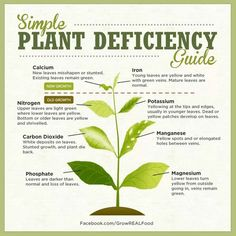 Simple Plant Deficiency Chart