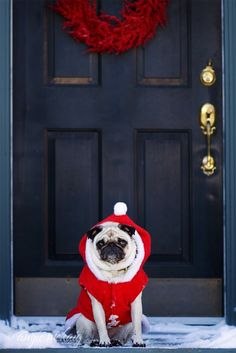christmas cards, christmas pictures, christma pug, front doors, christmas outfits, pugs, dog pictures, puppi, christmas bedroom