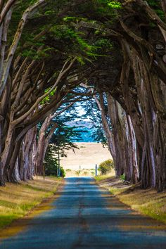 Pathway to somewhere.
