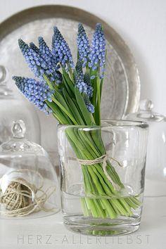 In Bloom April: Hyacinths