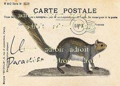 Squirrel stamp.