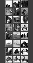 various prints - horses
