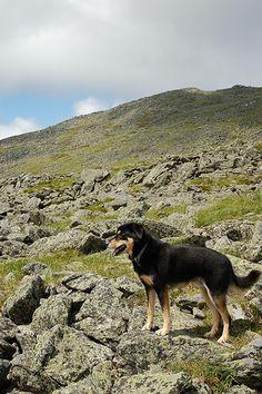 Dog friendly hikes in Utah