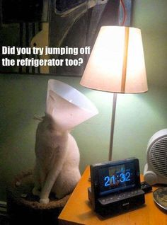 Did you jump off the refrigerator too?
