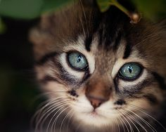 """Who can believe there is no soul behind those luminous eyes."" --Theophile Gautier"