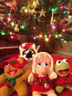 Not so happy Christmas cat *
