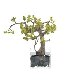 Succulent Bonsai Jade in Glass Cube - NDI | domino.com