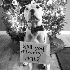 A new puppy and a new ring... Will you marry us? Perfect proposal... Give her the puppy and ring of her dreams from the man of her dreams.