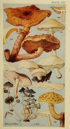 n324_w1150 by BioDivLibrary, via Flickr