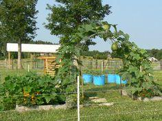 - Square Foot Gardening Forum