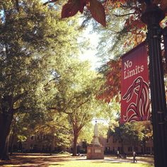 No Limits to the #UofSC Horseshoe's beauty.