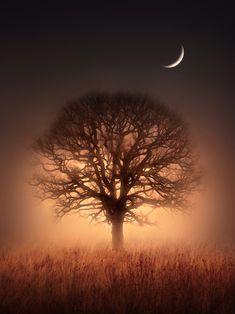Tree of Light by Jenny Woodward