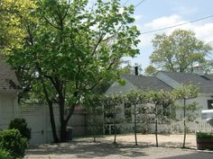 Espaliered crabapple trees create a living fence