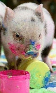 pig pig, little pigs, paint pig, color, pet