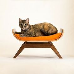 crazy expensive, but I just love this cat lounge.