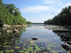 A morning view from Blueberry Swamp on the Yellow Trail, complete with dragonfly.  At Camp Yawgoog, Hopkinton, Rhode Island (RI).  A July 26, 2014, image by David R. Brierley.