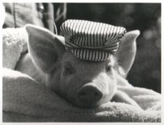 Then we saw him step in on the mat! We looked! And we saw him! The Pig in the Hat!