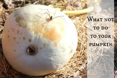 How To Grow A Pumpkin (and how not to)