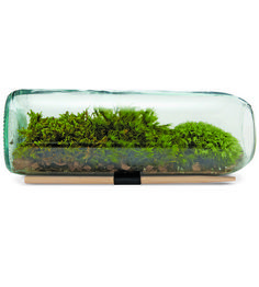 Grow your own little desktop garden with this complete moss terrarium kit. It includes everything your green thumb requires (even the bottle!) — so all you've got to do is get to planting. Soon enough, you'll be the proud owner of a little mossy knoll, which is a pretty big deal.