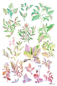 """""""Medicinal Plants"""" The first medicinal plant classification system ever created depicted in the #Intel #SciArt Series."""