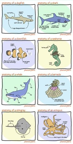 Anatomy of Sea Life (unscientific diagrams)