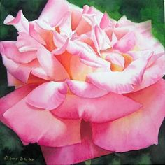 books, artists, pink roses, watercolor paintings, watercolor watercolor, watercolor flowers, watercolor rose, dori joa, canvases