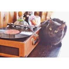 Bramble the cat knows how to serve up the smoothest tunes.