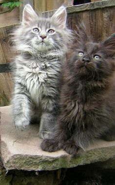 ✯ Adorable Cats