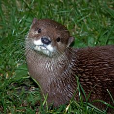 Otter Tilts His Head for Maximum Cuteness  Via me'nthedogs