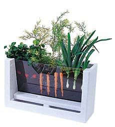 Root-Vue Farm.  Kids can watch their veggies grow.