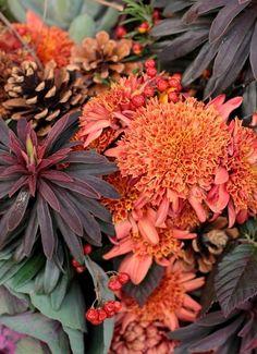 mum varieties   10 favorite Mum varieties - Love n' Fresh Flowers