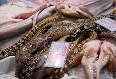 mercado da, foods, portug 2012, da ribeira, seafood market, lisbon, fish market, portug dream, portugues food