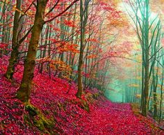 Red Forest Path, Italy