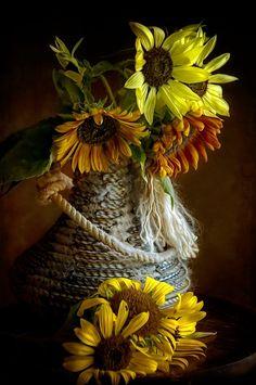 suflowers