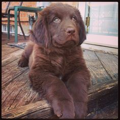 We are getting one of these....still working on the name....