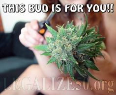 This bud is for you