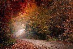 beautiful fall drive