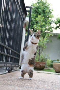 """Able Maew Is Sure To Make You Go """"Awww,"""" Such A Lovely Kitty Cat!"""
