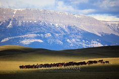 Cattle Ranch in Montana