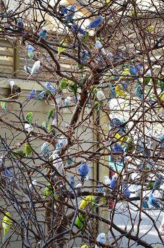 Budgie Tree by AllieBran, via Flickr