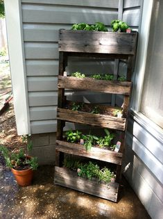 Great idea. Wood Pallet Garden, this could be an easy DIY... Good idea for lettuce and herbs.