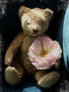 Vintage Steiff Teddy Bear