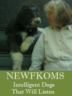Newfkom Pups...An original new breed!!