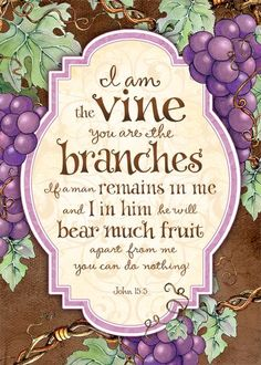God is the vine and we are the branches~we get our life and all things good from him❤
