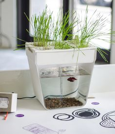 Countertop Aquaponics System : at right aquafarm the countertop aquaponics system cleans out the ...