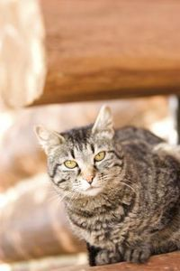 What Can I Use to Repel Cats Outside of My Home?