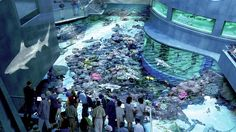 National Aquarium (in Baltimore, an hour away from DC)... In the top 5 best aquariums in the country!