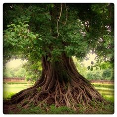 how firm a foundation.  I want to be like this tree.